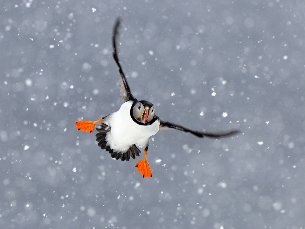 Een vliegtuig of pinguïn???